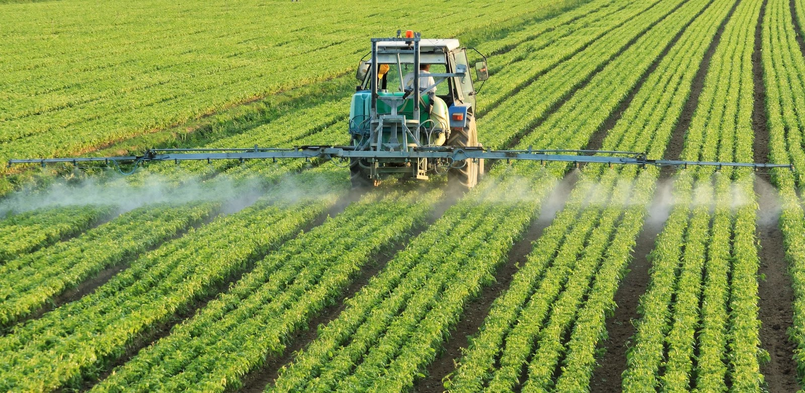 Bermuda Suspends Imports of Glyphosate after WHO Report